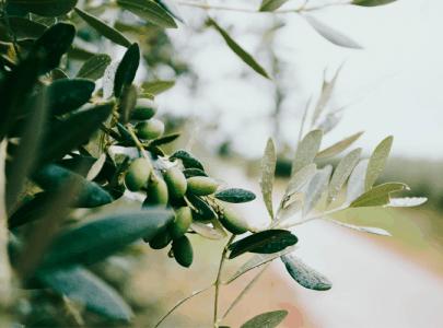 Hautpflege mit Olivenöl
