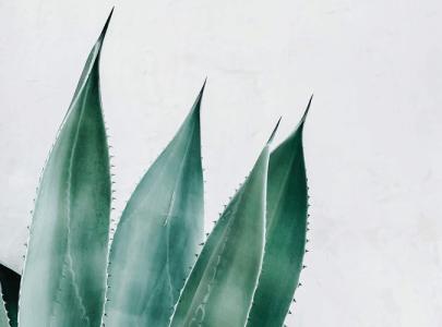 Die Kraft der Aloe Vera Pflanze in Naturkosmetik